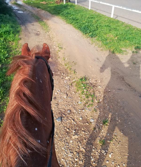 back on the saddle