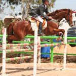 Talo the horse Jumping