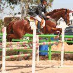 Talo the horse Jumping