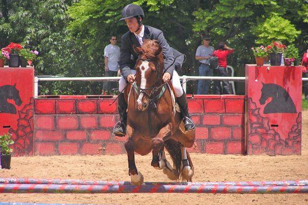 Talo the horse