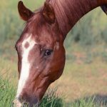 Talo the horse - grass turnout