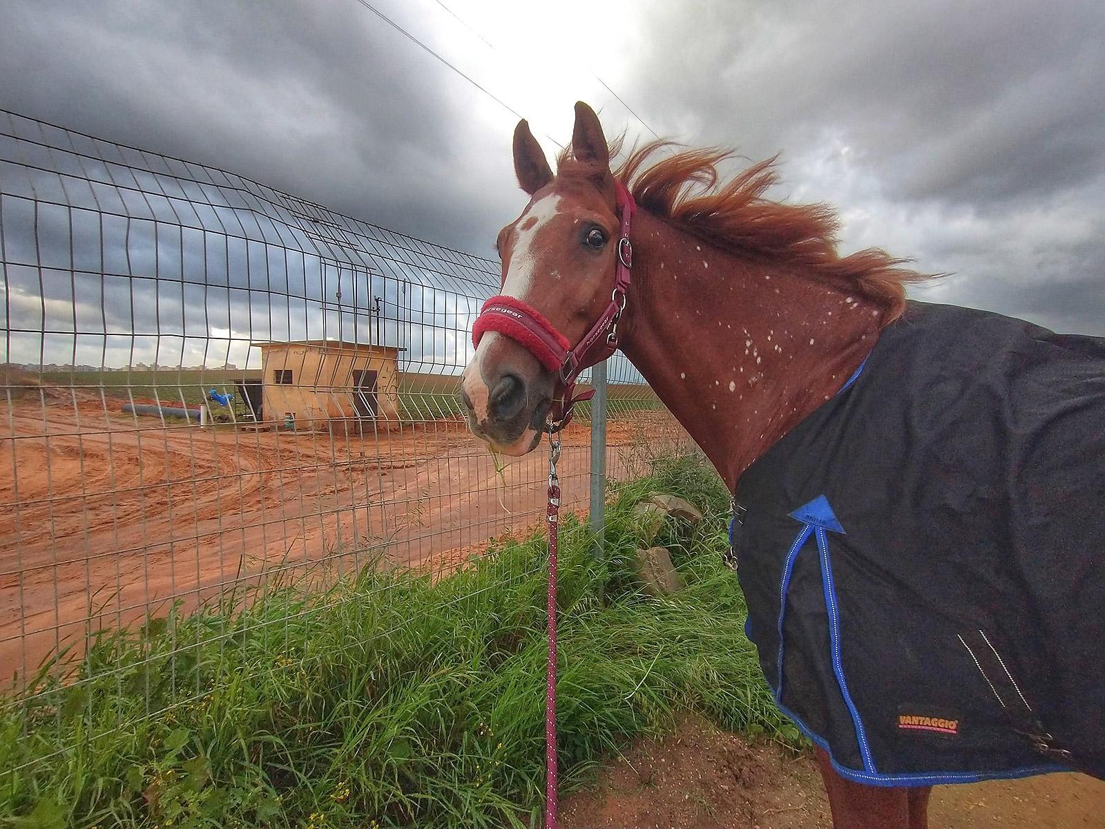 Talo dramatic winter horse